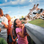Busch Gardens Tampa Vacation Package Orlando FL