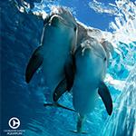 Clearwater Marine Aquarium in Clearwater Beach FL