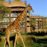 Disney's Animal Kingdom Lodge in Lake Buena Vista FL