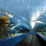Ripley's Aquarium in Myrtle Beach SC