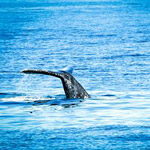 Winter Whale Watching Adventure in San Diego CA