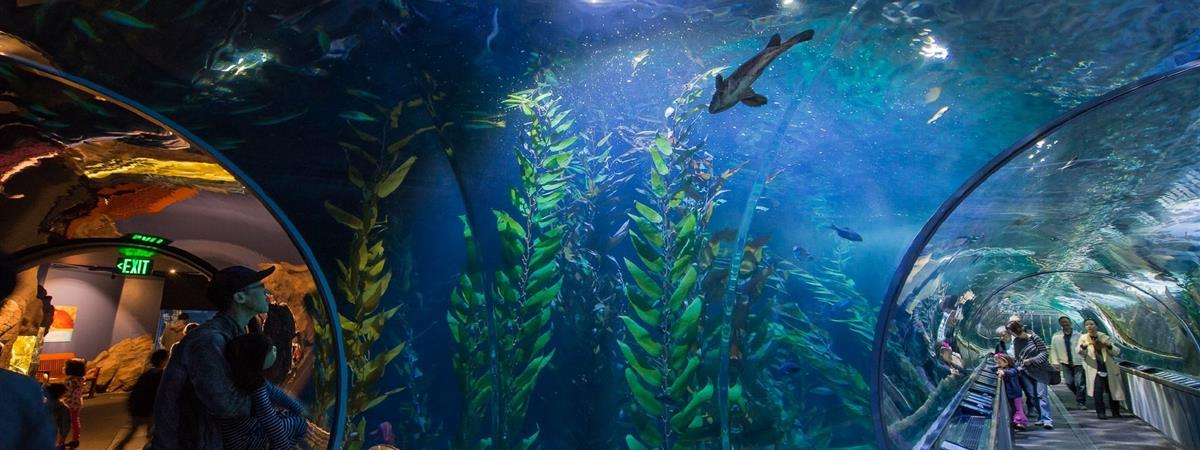 Aquarium Of The Bay Tickets San Francisco Ca