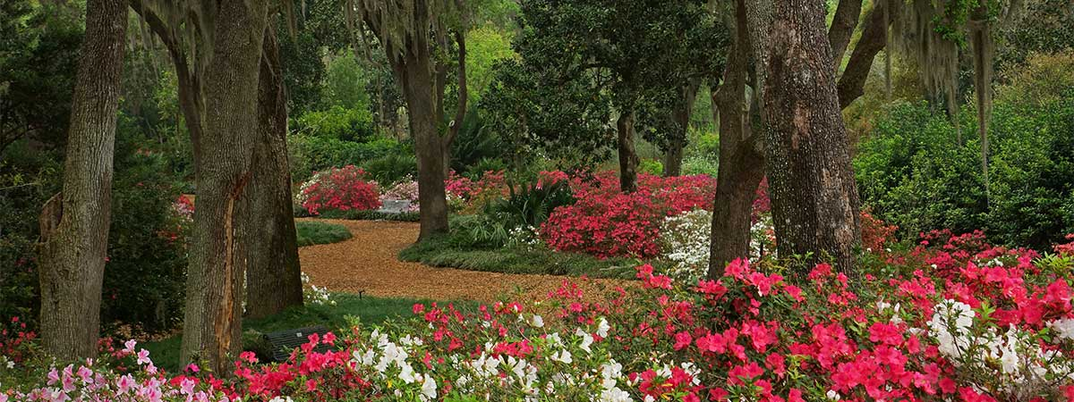 a survey of bok tower gardens The latest tweets from bok tower gardens (@boktower) awesome garden located in central florida with a 205-foot singing tower, 1932 mediterranean-style estate, family events, cafe, gift shop, nature trails & more lake wales, fl.