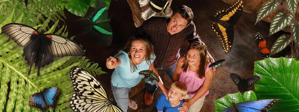 Butterfly Palace & Rainforest Adventure in Branson, Missouri