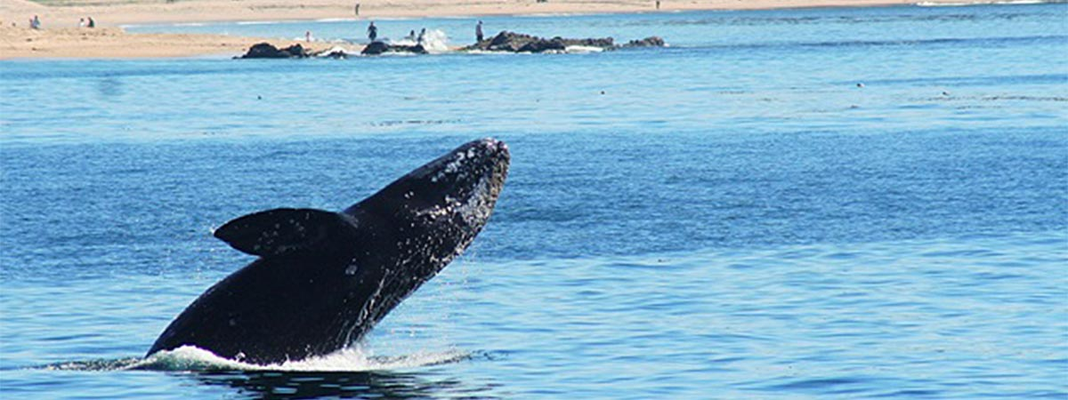 Davey's Locker Whale Watching in Newport Beach, California