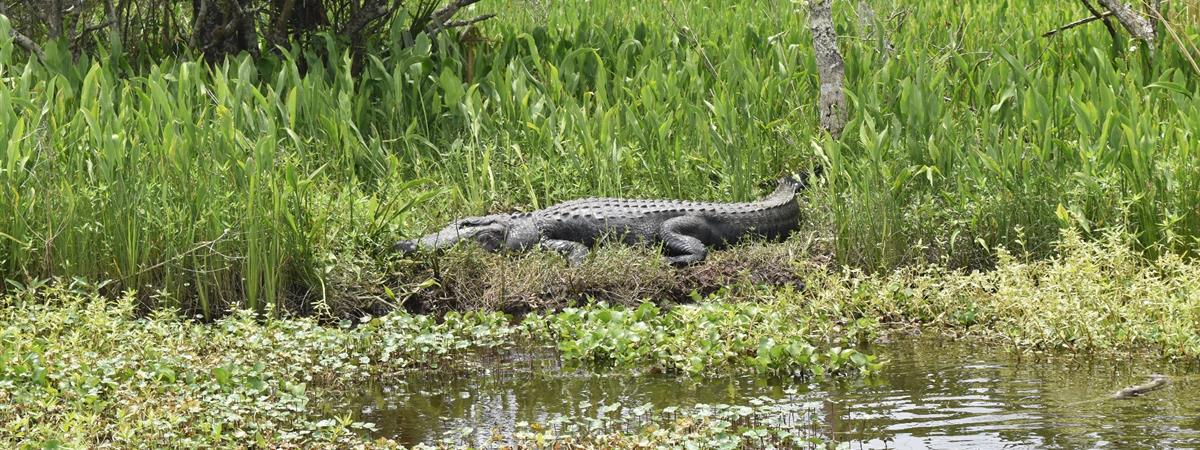 Jean Lafitte Swamp Tours in Marrero, Louisiana