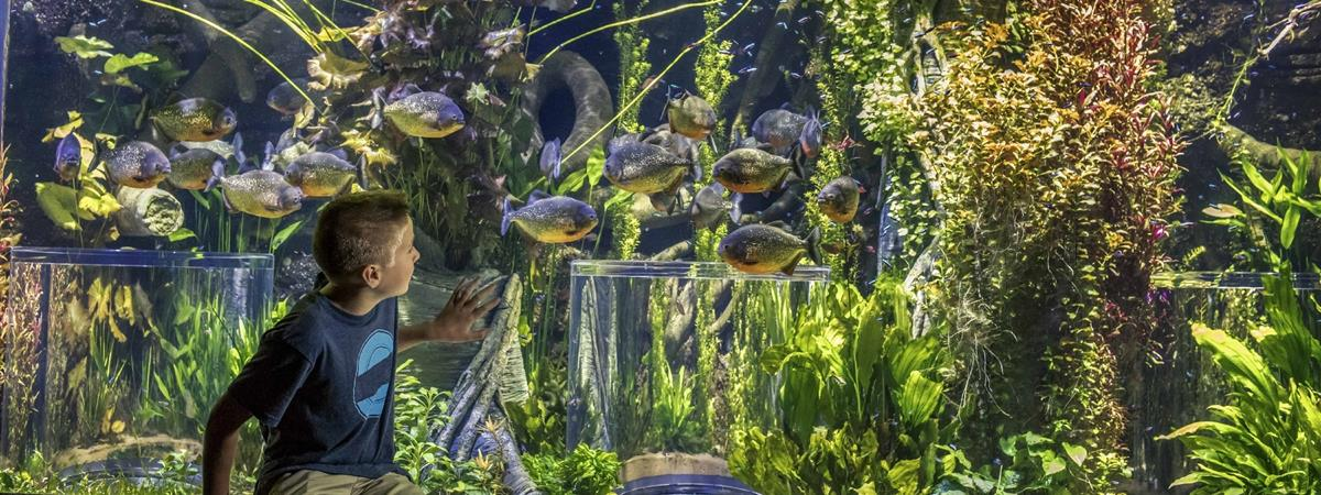 Johnny Morris' Wonders of Wildlife National Museum & Aquarium in Springfield, Missouri