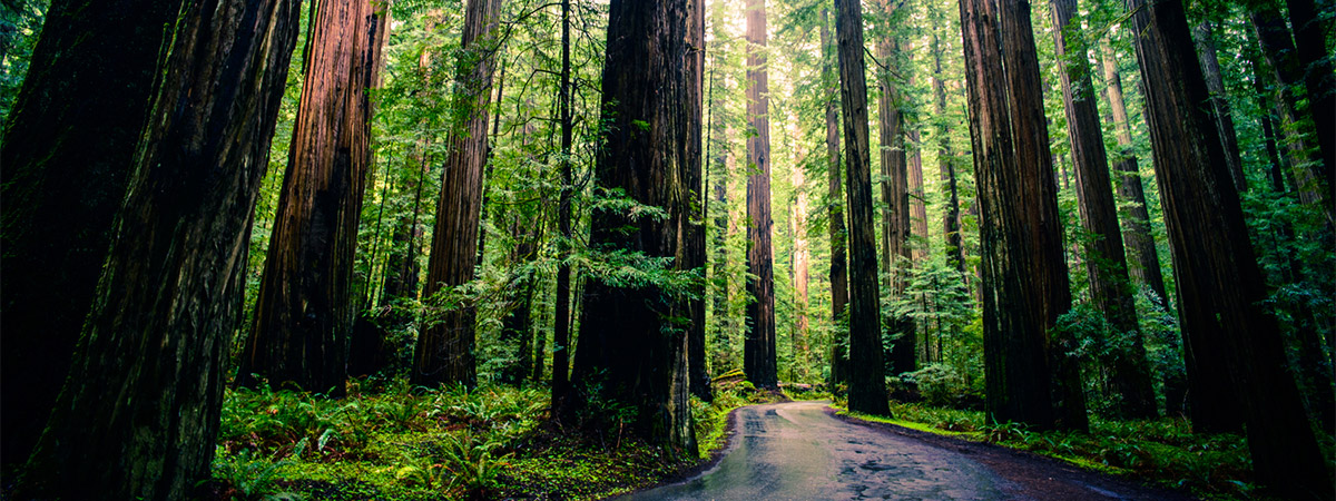 Muir Woods Expedition in San Franscisco, California