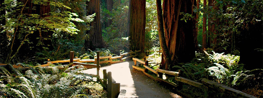 Muir Woods and Wine Country Day Tour
