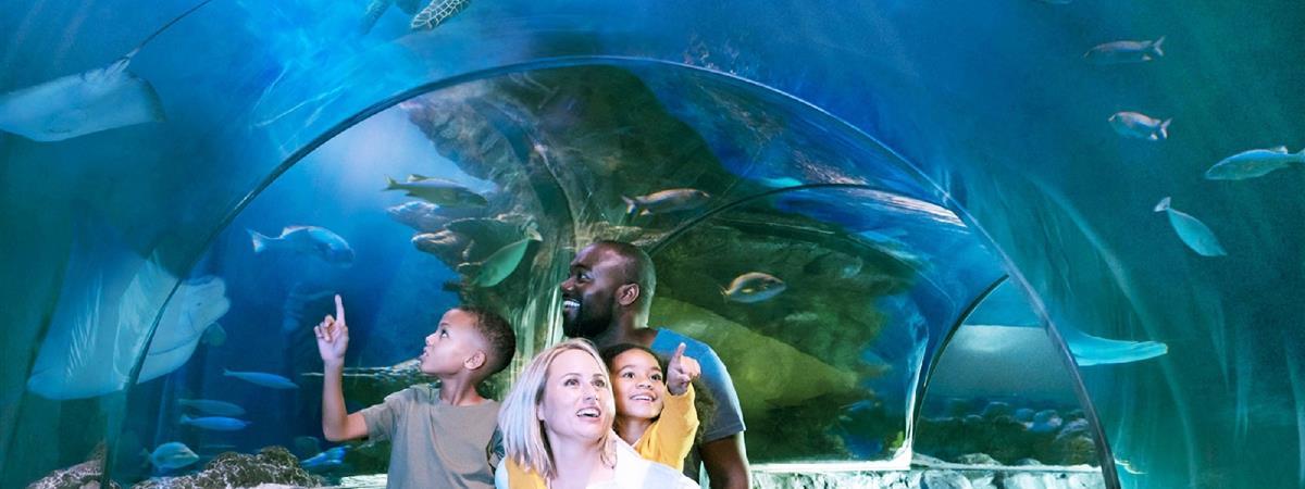 Nc Aquarium Myrtle Beach