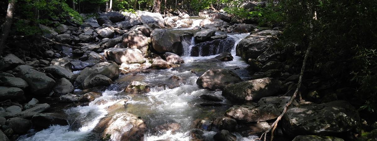 Sights of the Smokies Tour in Pigeon Forge, Tennessee