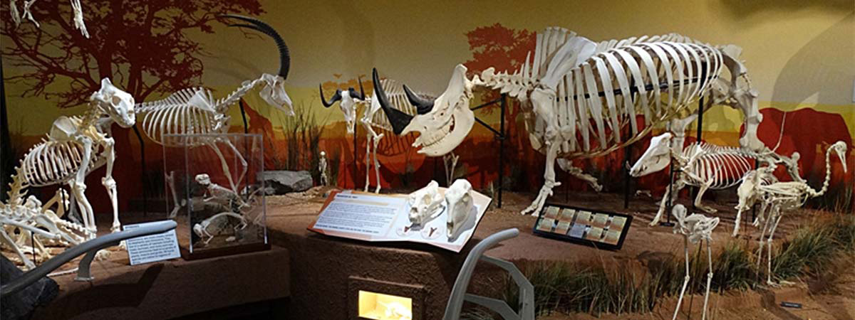 SKELETONS: Museum of Osteology in Orlando, Florida