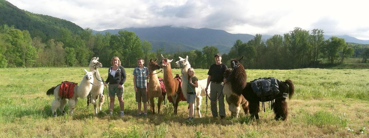 Smoky Mountain Llama Treks in Cosby, Tennessee