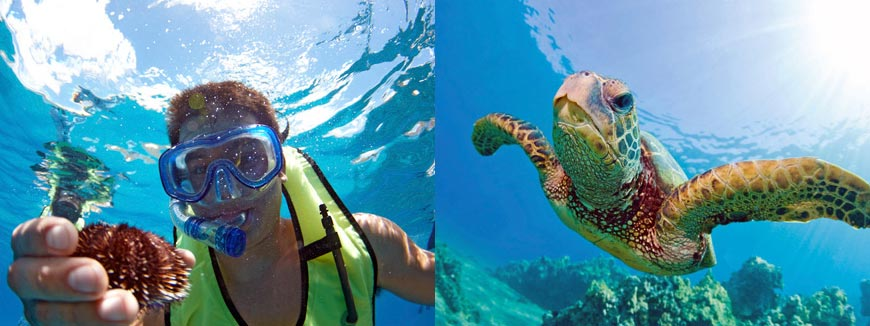 Turtle Snorkel Sail with Lunch in Honolulu, Hawaii