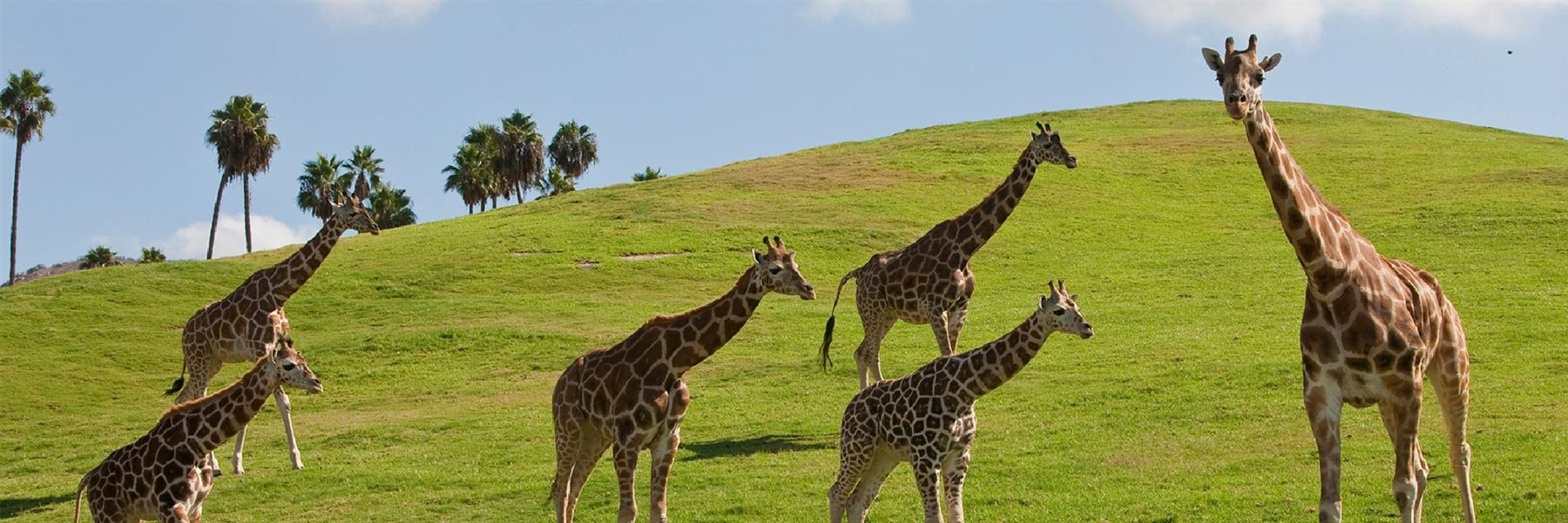 San Diego Zoo Safari Park in Escondido, California