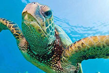 Turtles Guaranteed Snorkel Sail in Honolulu, Hawaii