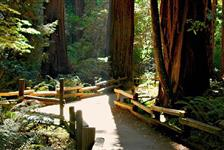 Muir Woods & Sausalito Half Day Tour in San Francisco CA