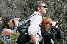 Rainforest & Dry Forest Birding Adventure in Kailua-Kona, Big island HI