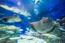 Ripley's Aquarium of Canada in Toronto, Ontario