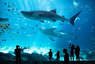 Georgia Aquarium in Atlanta, Georgia