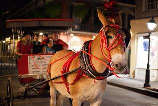 History & Haunts Carriage Tours in New Orleans, Louisiana