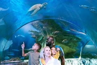 SEA LIFE Orlando Aquarium in Orlando FL