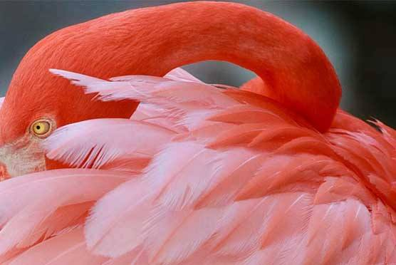 Flamingo Gardens in Davie FL