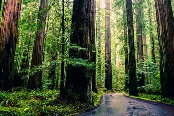 Muir Woods Expedition in San Franscisco CA