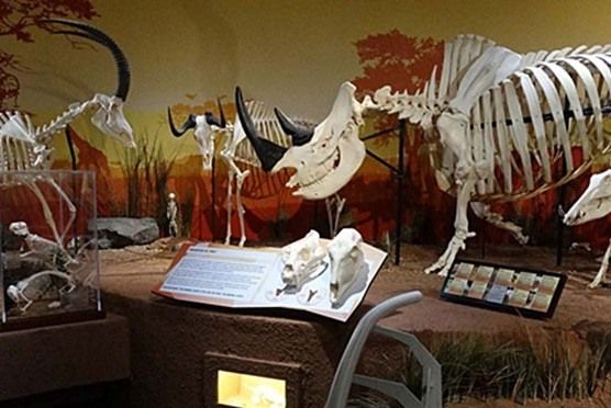 SKELETONS: Museum of Osteology in Orlando FL
