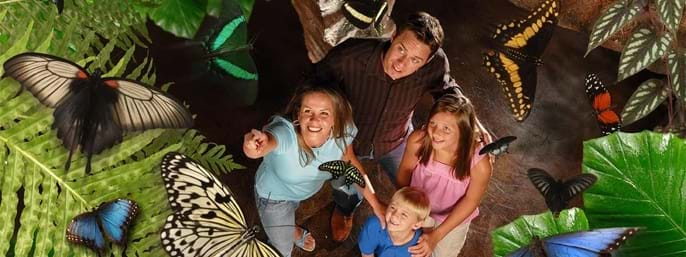 Butterfly Palace & Rainforest Adventure Logo