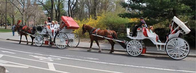 Central Park Horse and Carriage Tour in New York NY