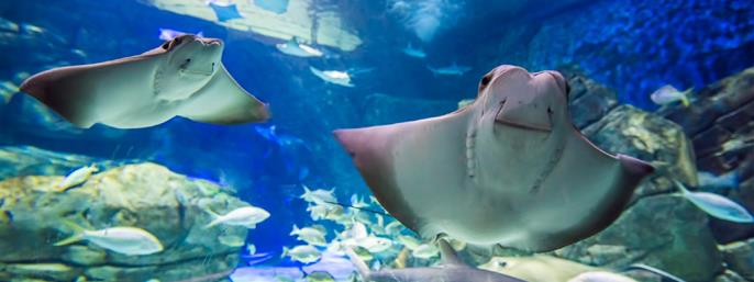 Ripley's Aquarium of Canada in Toronto ON
