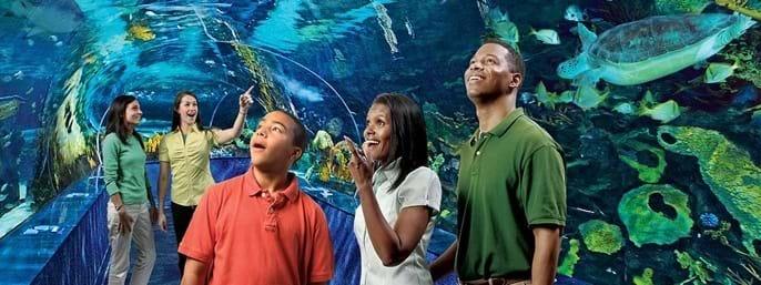 Ripley's Aquarium of the Smokies in Gatlinburg TN