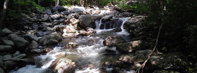 Sights of the Smokies Tour in Gatlinburg TN
