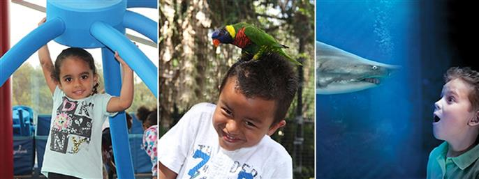 Tampa Value Ticket: Florida Aquarium, MOSI & Tampa's Lowry Park Zoo in Tampa FL