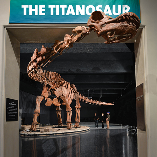 The latest must-see exhibit at the Museum: The largest dinosaur ever discovered, a cast of a 122-foot-long titanosaur. (included with admission)