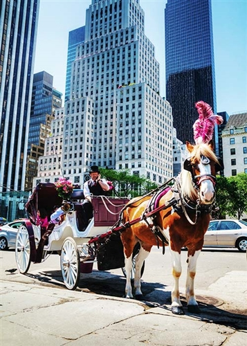 Central Park Horse and Carriage Tour in New York, New York