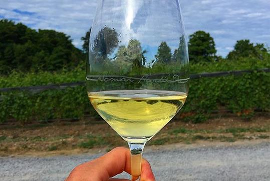 Wine and vineyards aplenty - Cozy in the County wine tour with New World Wine Tours in Toronto, ON