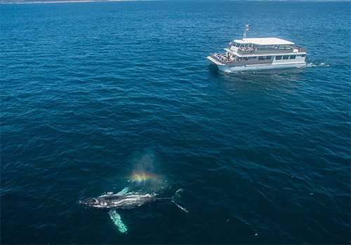 Our newest vessel called the Newport Legacy! - Davey's Locker Whale Watching in Newport Beach, California