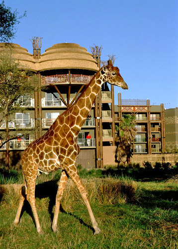 Disney's Animal Kingdom Lodge in Lake Buena Vista, Florida
