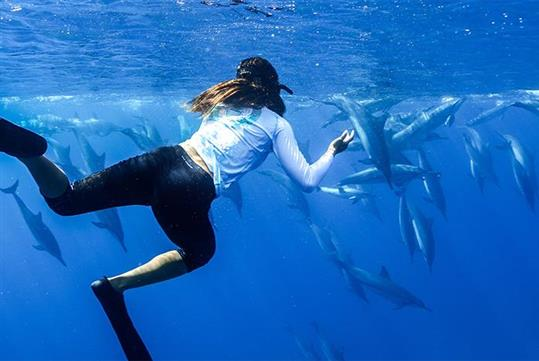 Cross a swim with dolphins in Oahu off of your bucket list today!