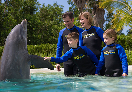 Dolphin encounter at Miami Seaquarium in Miami, Florida
