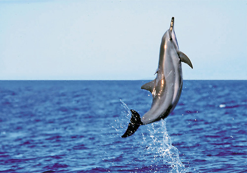 delight in the acrobatics of the wild dolphins