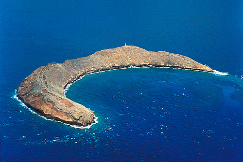 Molokini is one of the most popular snorkeling destinations in the world