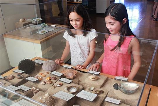 Shells and more to explore! - San Diego Natural History Museum in San Diego, California