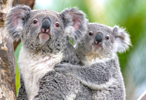 San Diego Zoo Tickets Zoo Discounts Deals
