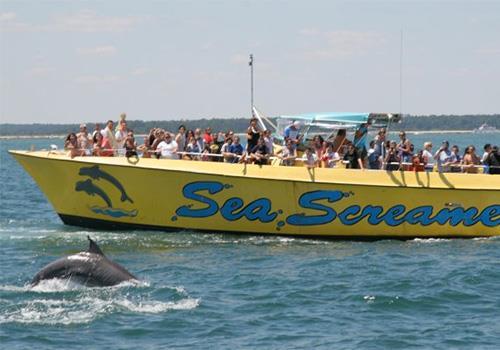 Sea Screamer Myrtle Beach Dolphin Cruises In Little River South Carolina
