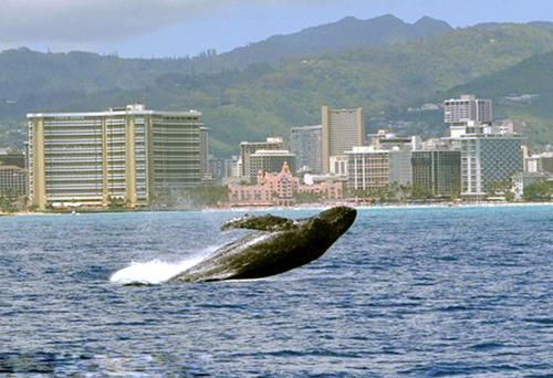 Star Of Honolulu Whale Watch Cruise Honolulu Hi