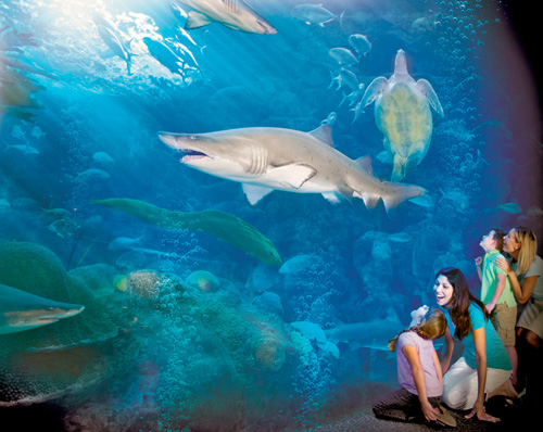 Sharks - The Florida Aquarium in Tampa, Florida