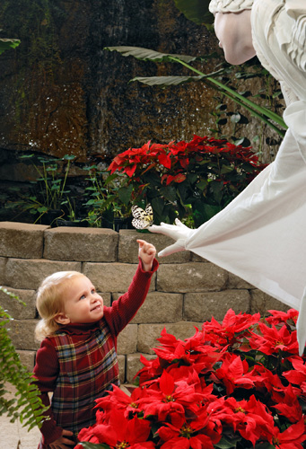Christmas at The Butterfly Palace & Rainforest Adventure Exhibit in Branson, Missouri